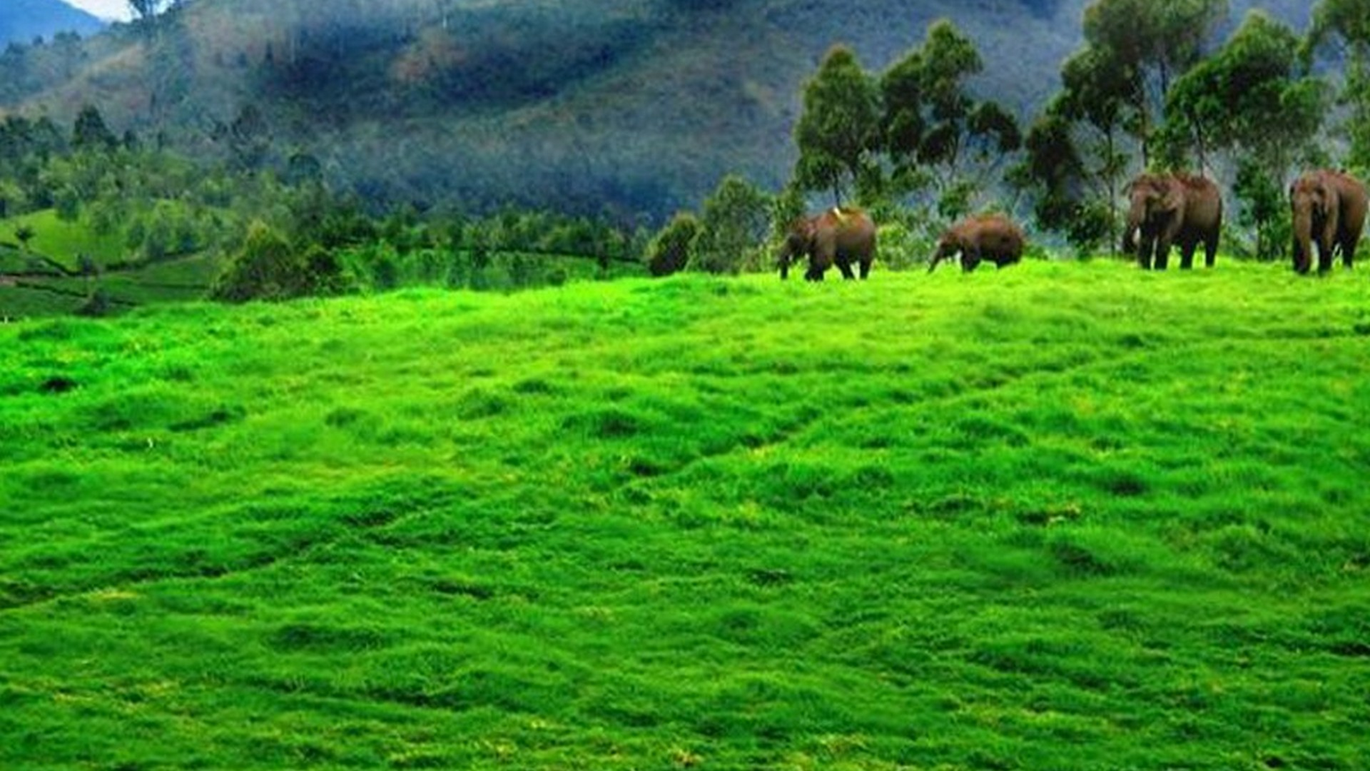 Kerala Elephant Hd Wallpapers 1920x1080