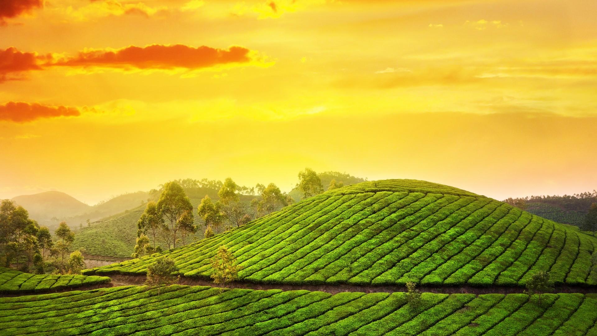striking-beauty-of-kerala