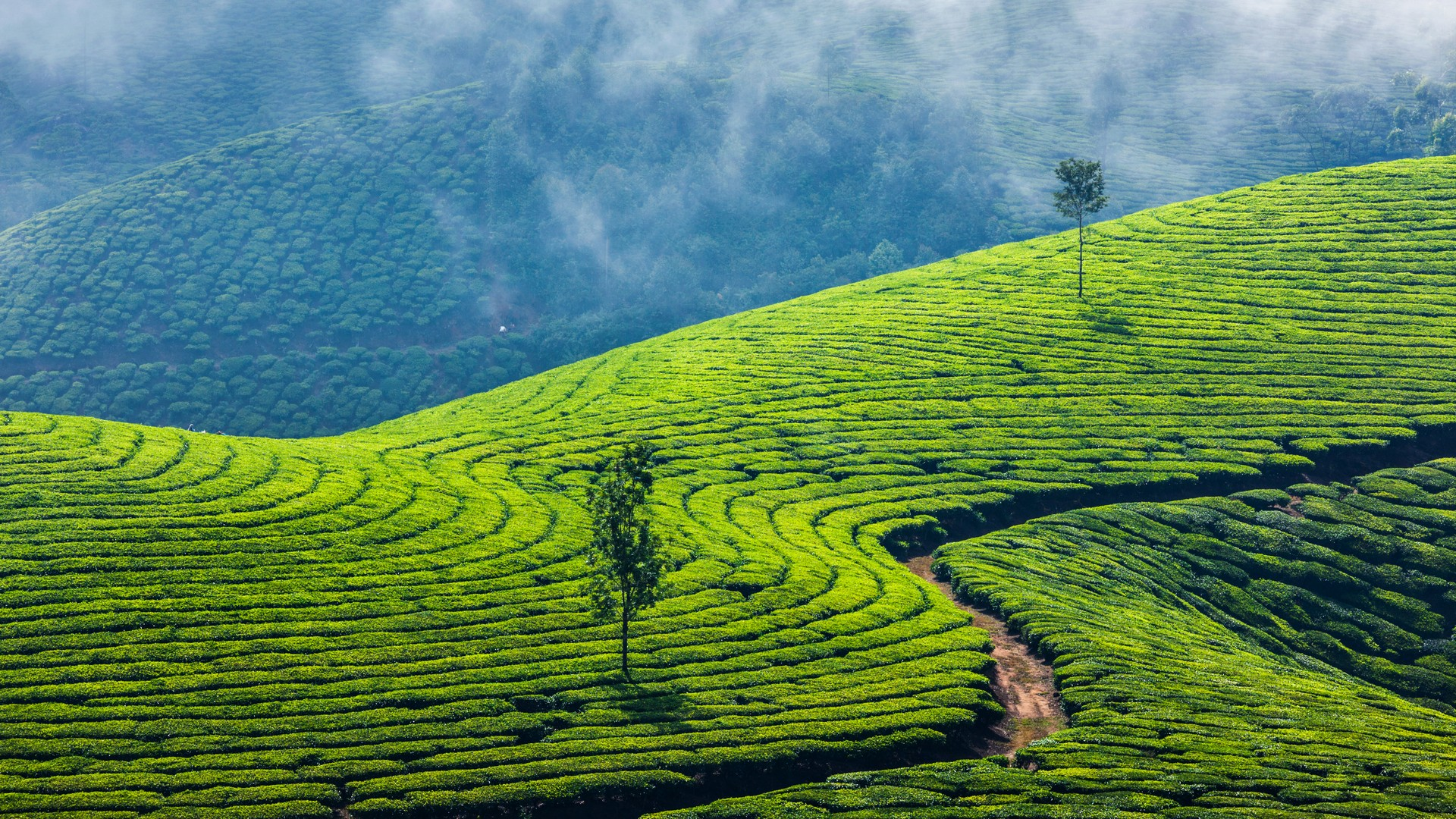 misty-munnar-package