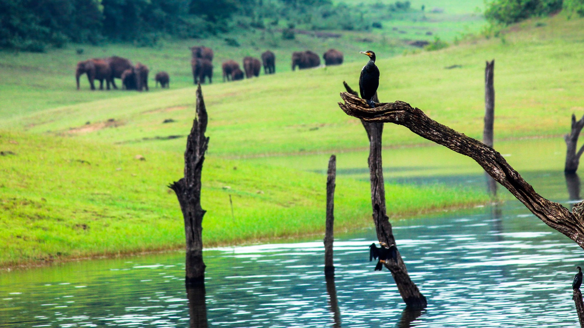 striking-kerala-tour