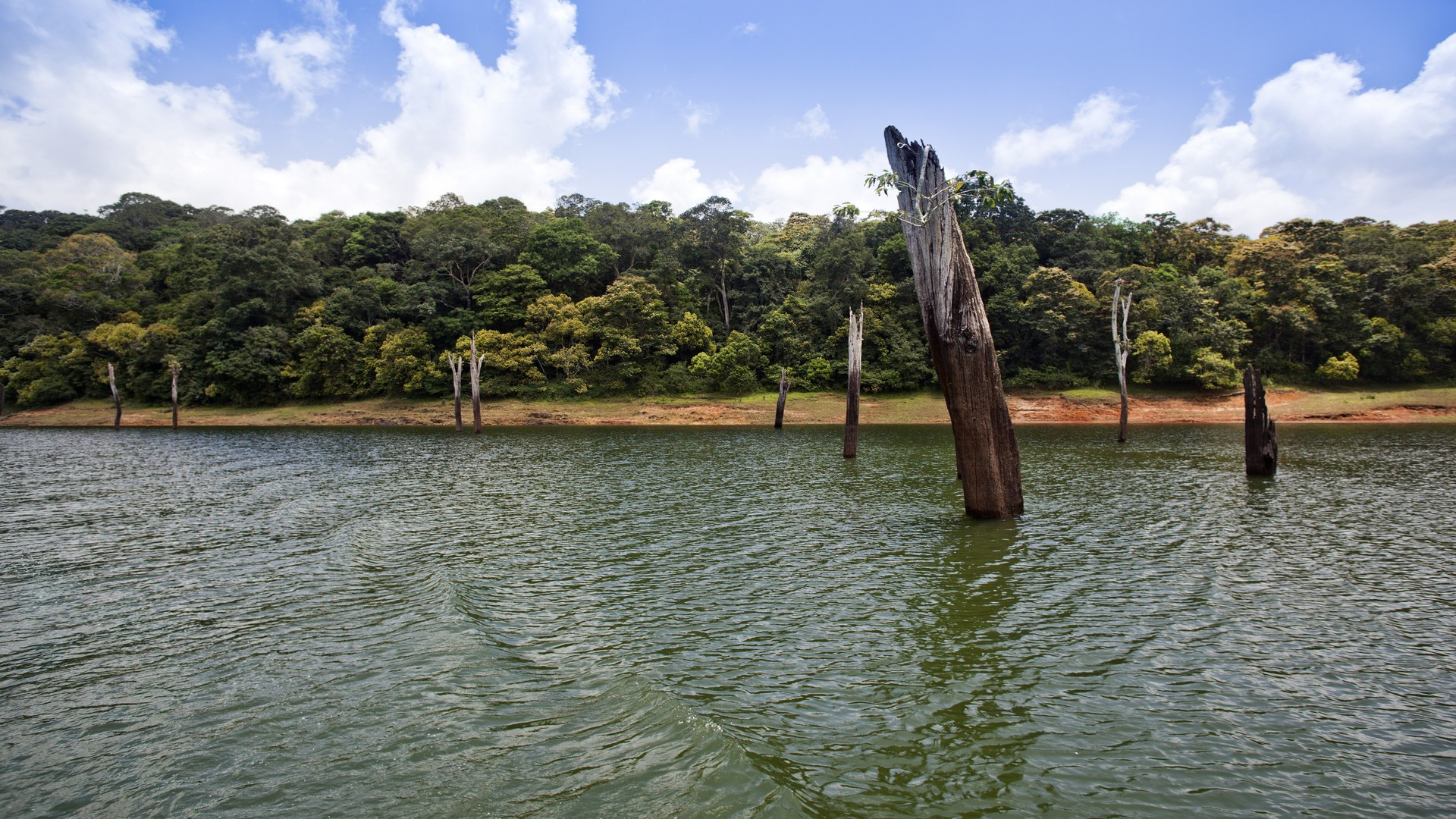 Best 10 Places to visit in Thekkady